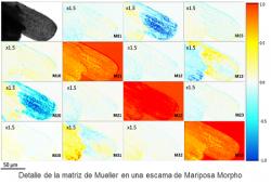 matriz mueller microscopio ub arteaga secpho